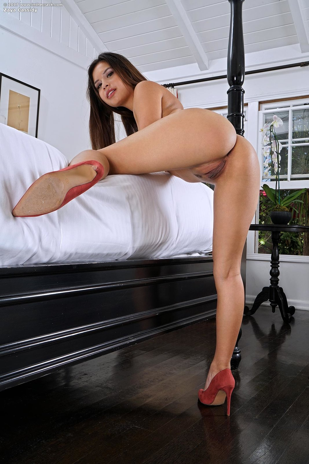 Babe Today Inthecrack Zaya Cassidy Contain Babes Xxx-pic887